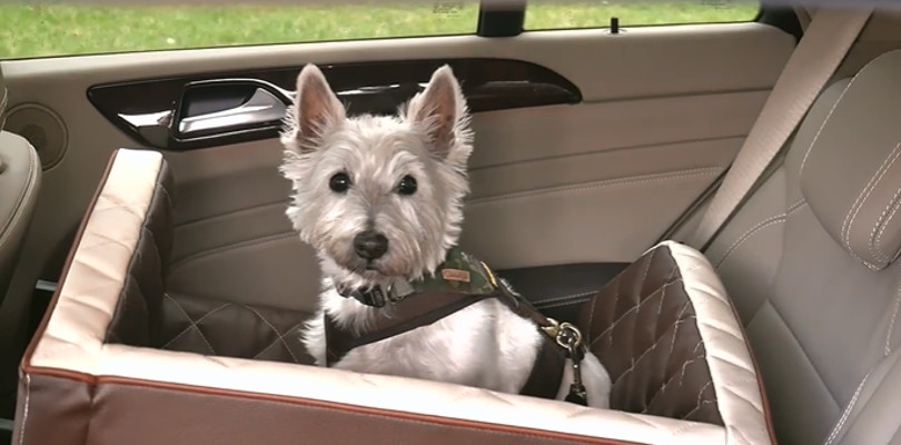 "Harry Wijnvoord – DOGSTYLER – ""DOG SAFETYSEAT"""